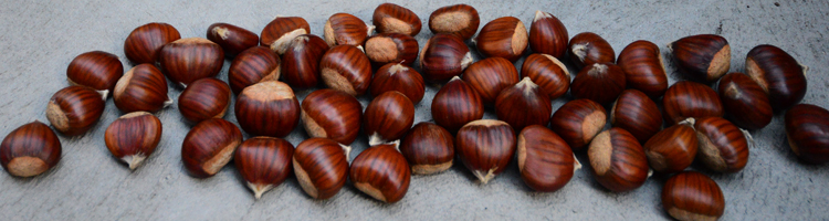 Chestnuts 013