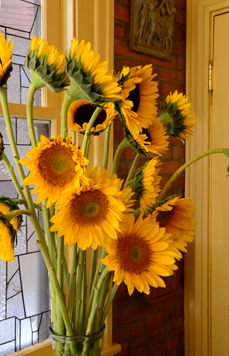 sunflowers19