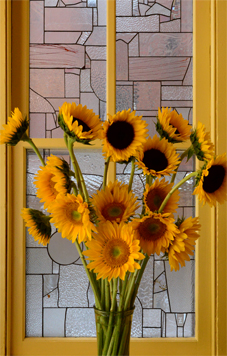 sunflowers20