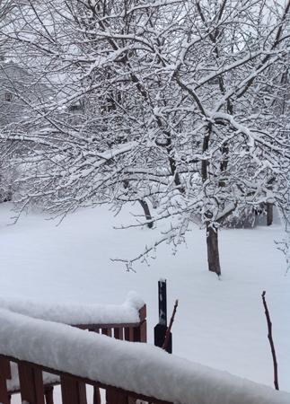rose-snow