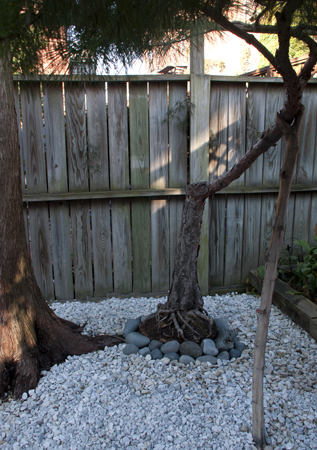 Tree-Stones