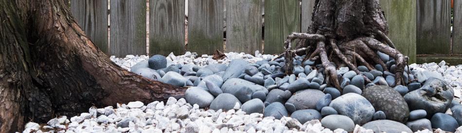 rocks-pine