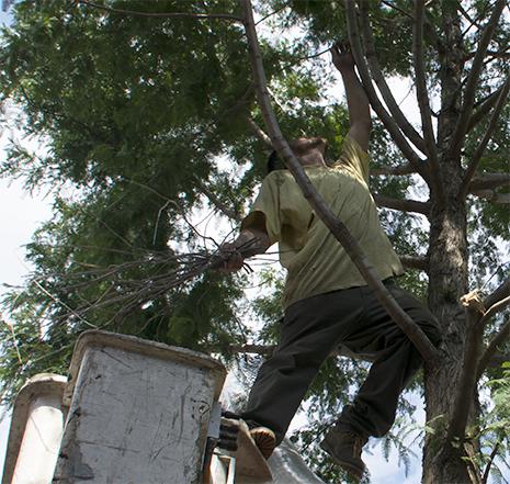 tree-pruning3